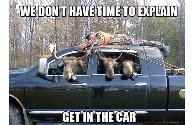 memes funny hilarious meme explain truck funniest animal vehicle bad animals jokes getinthecar driver ever items hunting moose canada redneck