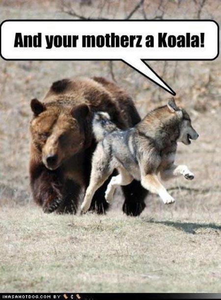 Hilarious Animals (12)