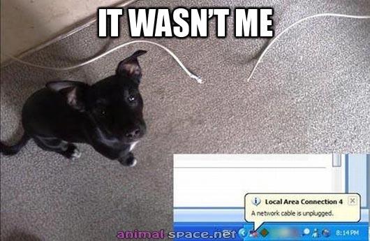 Hilarious Animals (8)