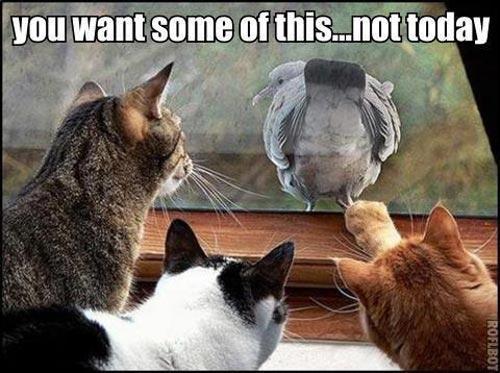 Hilarious Animals (1)