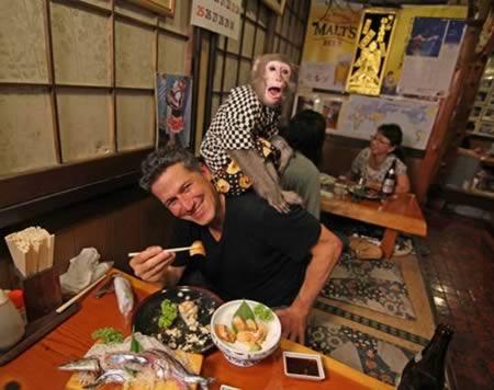 a98481_restaurant_10-monkey-waitress