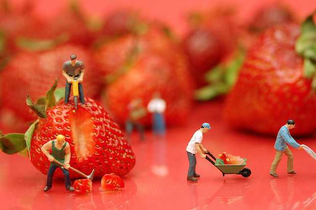 Funny Miniature Scenes