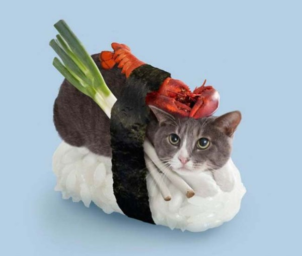 Cute or creepy: Cats as Sushi