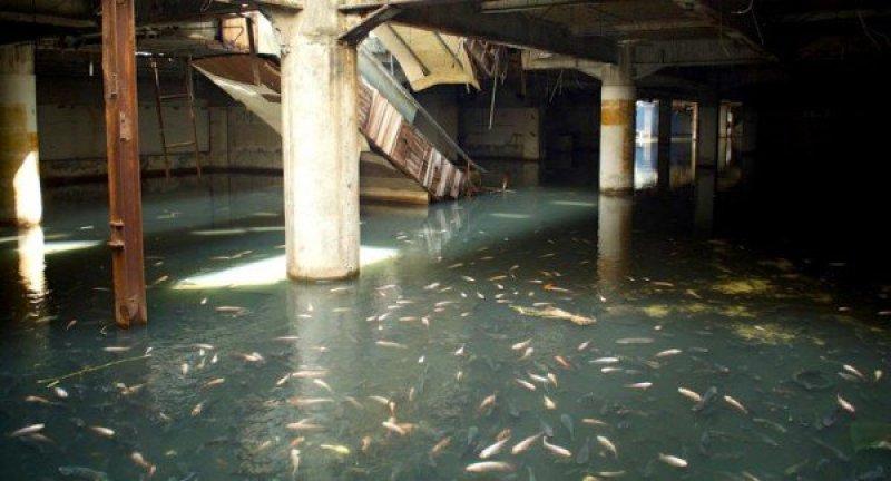 ABANDONED MALL FULL OF FISH