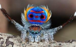 Dans Eden Örümcekler