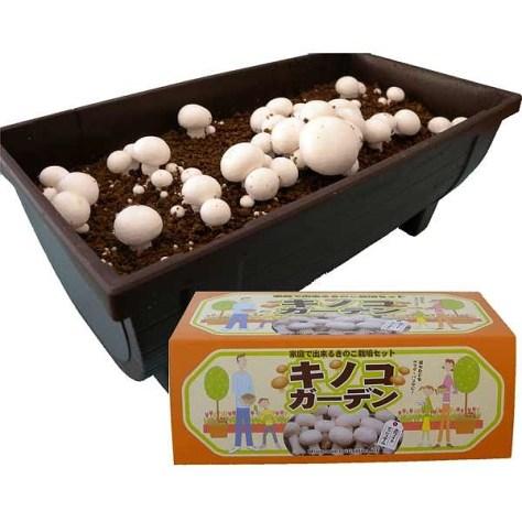 キノコガーデン(ホワイトマッシュルーム栽培キット) 野菜の苗 『園芸ネット』本店 通販 engei.net HPから引用