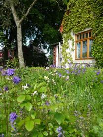 Juni: Iris und Storchschnabel blühen