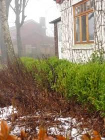 Januar. Schnee-Reste im Nebel