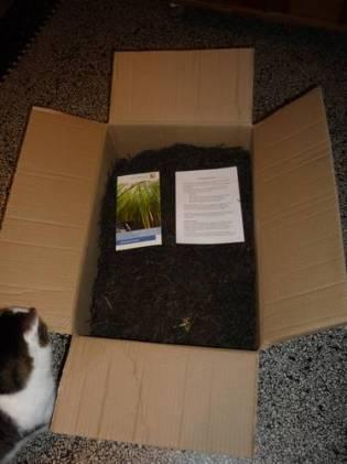 ..und dazu ein Riesenkarton mit Seegras zum nachstopfen