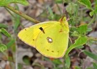 LOTS of butterflies!