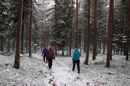 Nice forest walk!