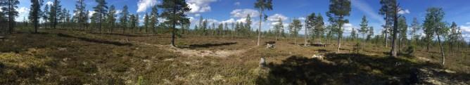 On top of Staupåsen