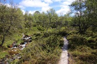 Along Bjørbekken creek