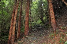Nice forest path