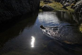 Karma gets a swim