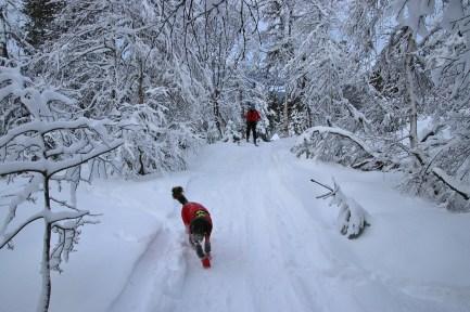 Snowmobile tracks!
