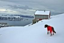Fjord view is always nice...