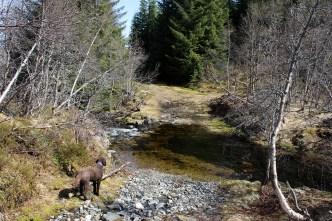 Crossing Stølselva