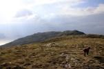 Bergsheia