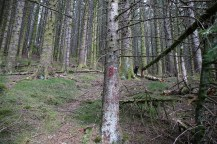 Found a marked path