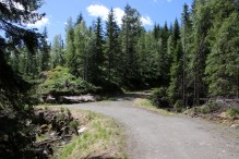 End of the forest road