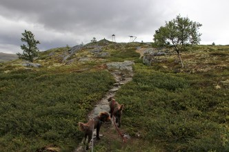 On the path to Gråhøe