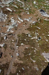 Lemming trail?