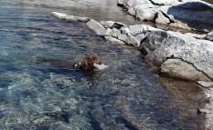 Ice retrieving dog