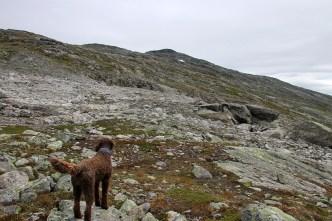 The ridge in view