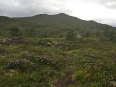 Towards Rjåhornet
