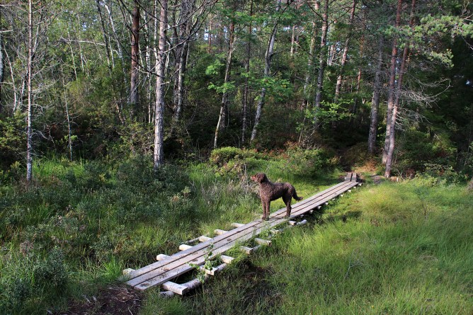 Nice walkways in the forest
