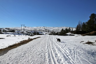 Heading out from Utvikfjellet
