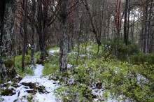 Weird forest colors