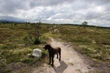 Nice trails!
