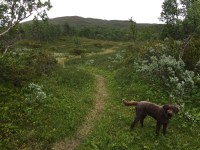 Found a nice path