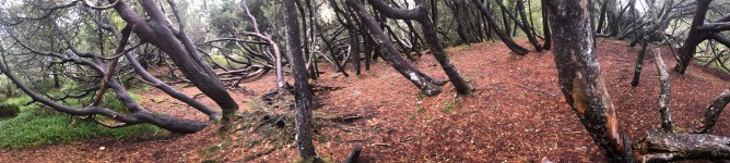 """The """"troll forest"""". Fun to climb the trees here!"""