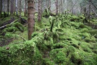 Green dead trees...