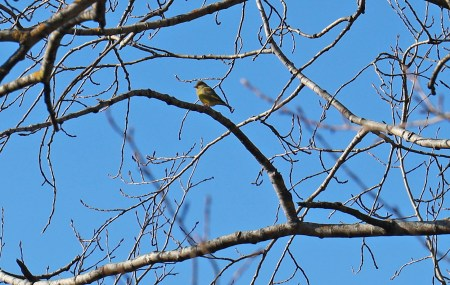 Birds chanting