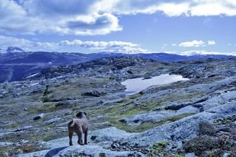 Towards Fjøsnenosi