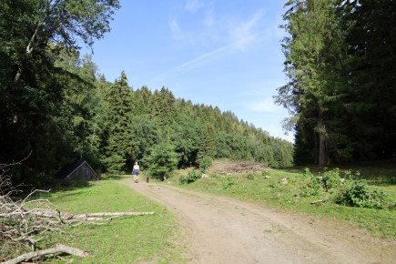 Into the Børsåsen forest