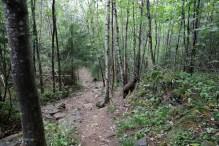 Descending the forest