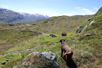 Karma, overlooking Frøylandsstølen