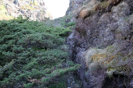 In the Buskefjellet gorge
