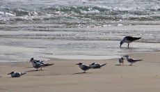 Birdlife on the beach