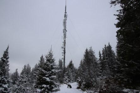 Towards the mast