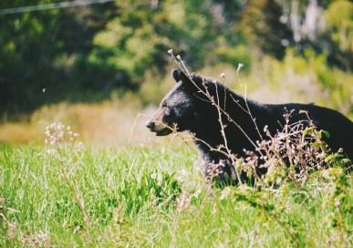 A Lovely, Sunny Day in Forillon National Park, Gaspésie, Québec