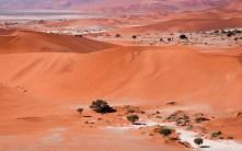 Sossusvlei nebo Naravlei, Namibie