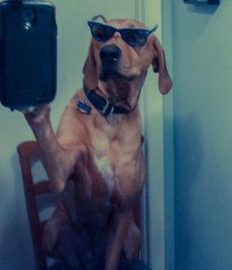 eko-selfie
