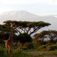 Vivere il Kenya tra safari e mare