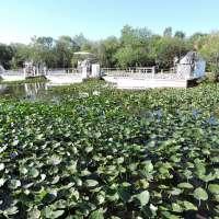 Everglades National Park: le foreste tropicali della Florida
